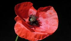 Remembrance Day Ceremony November 8th 10:00 am